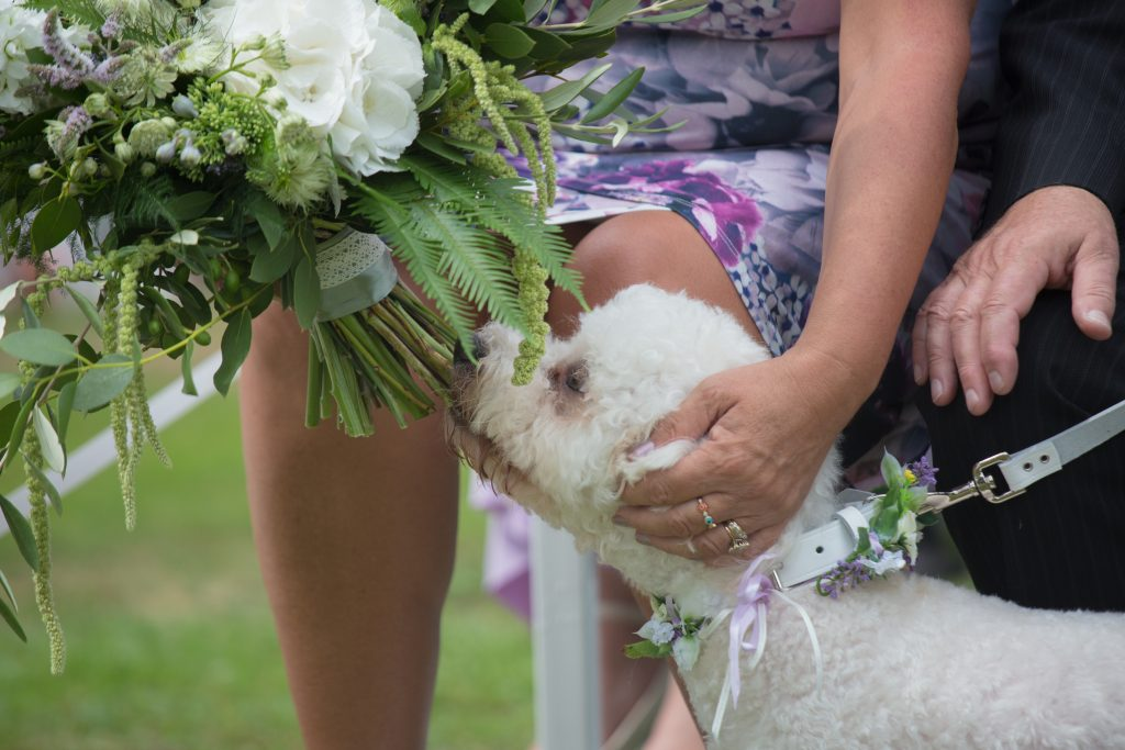 dog sniffing bouquet
