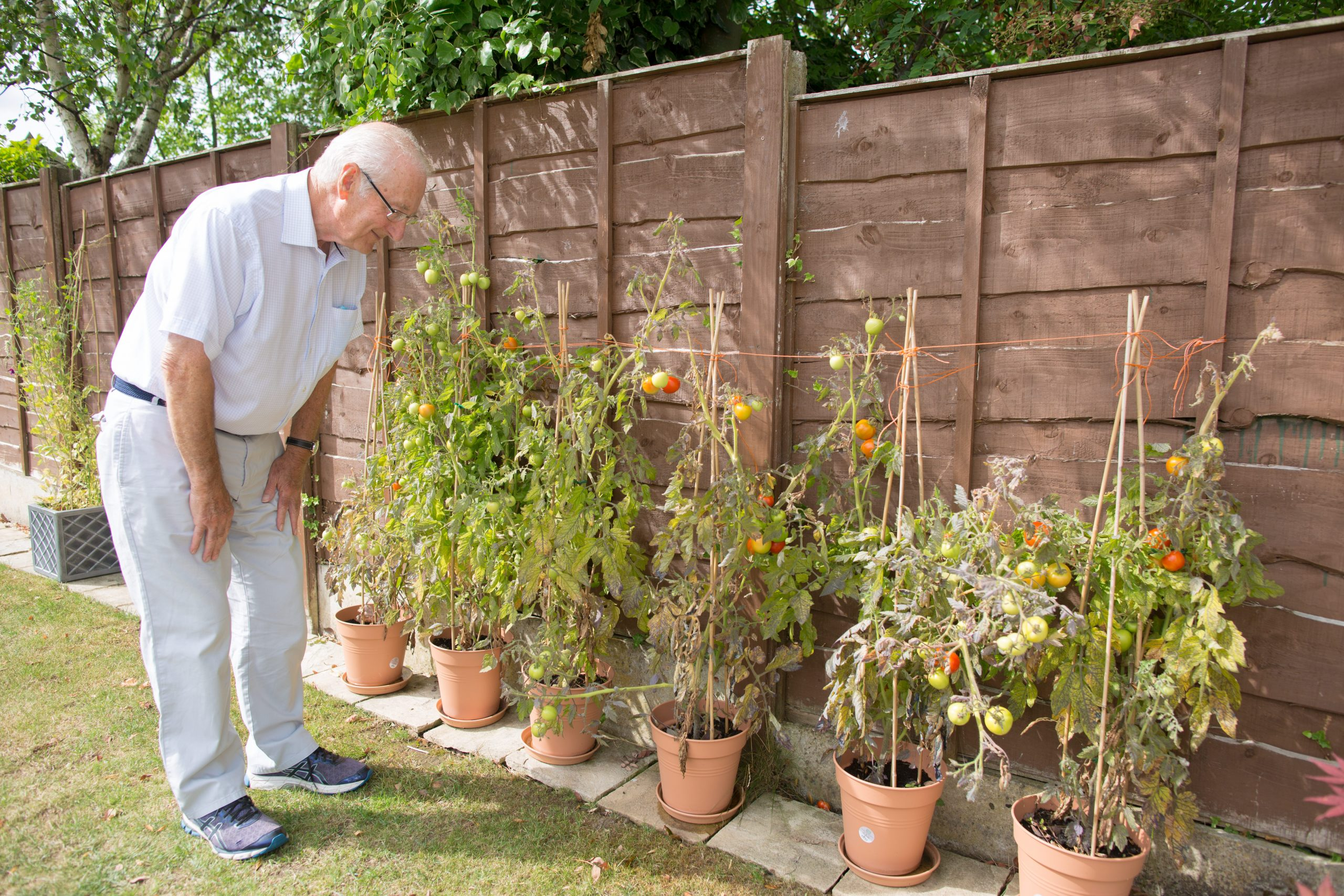 grandad looking at his tomato plants on wedding morning